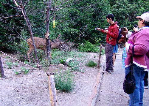 Yosemite 010_edit