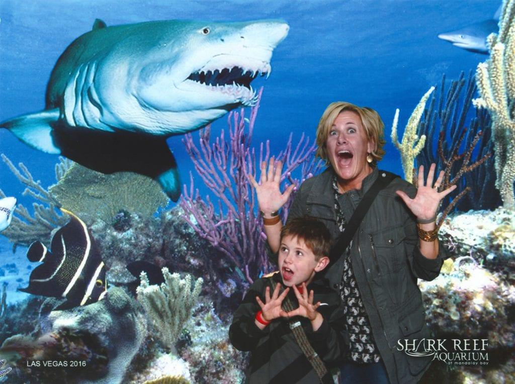 shark-reef_2_resize